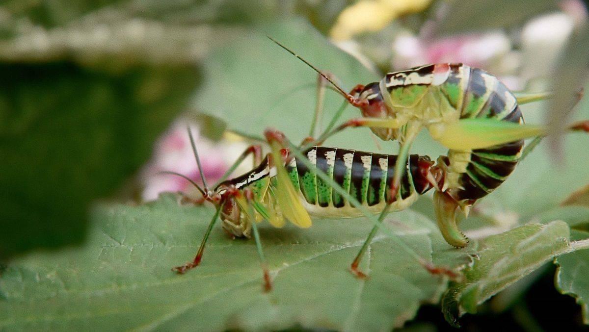 Artenvielfalt beginnt in Deinem Garten